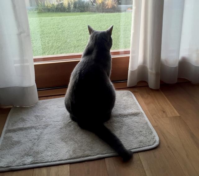 賃貸物件の窓に付けたい!猫の脱走防止に有効なアイテムは?