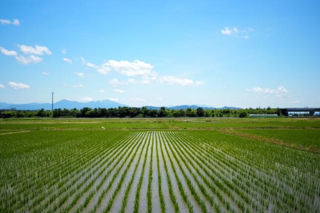 農地転用して宅地にしたい!かかる費用の相場はどれくらい?