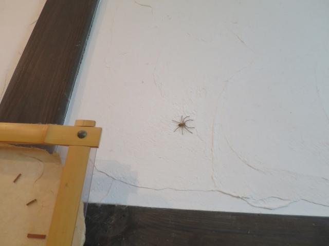 部屋に蜘蛛が!白い蜘蛛は有害?無害?