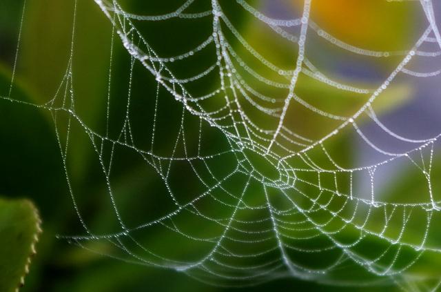 いつの間に!家の中に蜘蛛の巣が多いのはなぜ?予防&対策