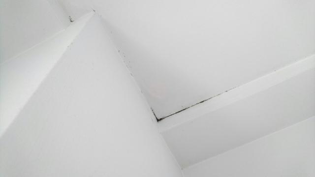アパートの壁紙にカビが生えた!その対策と予防法は?