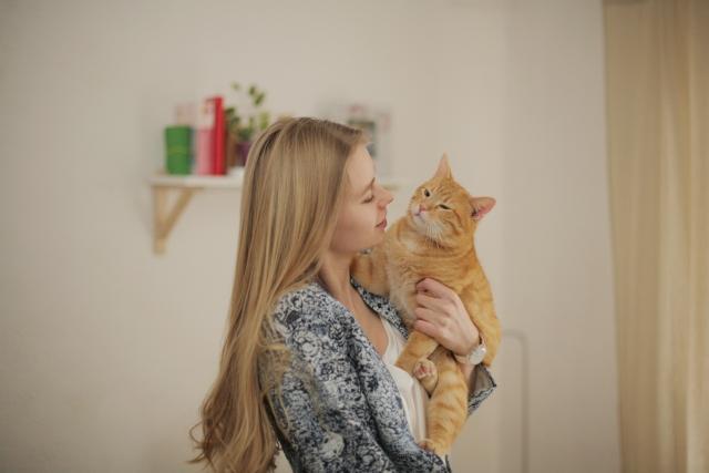 アパートで猫を飼ったら必ずバレる!猫と快適に暮らす方法
