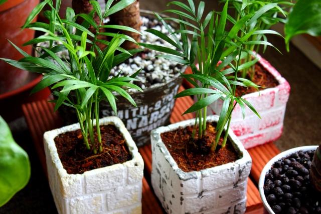 モルタルを使ったdiyでおしゃれな植木鉢を作ろう!