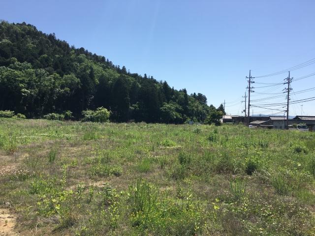 地目が山林の土地に住宅を建てるには?地目変更方法や注意点