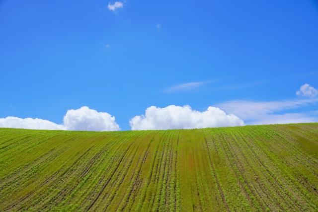 地目が「畑」の場合は売買できない?売買を行う方法とは?