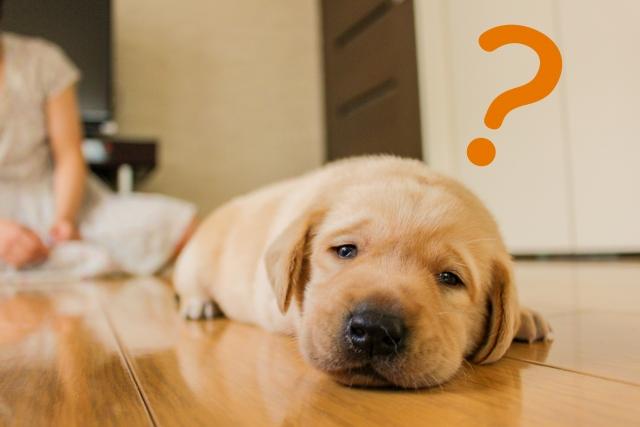 ペット不可のアパートでペットを内緒で飼うとどうなるの?
