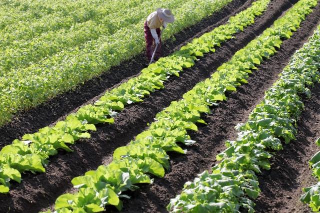地目変更で畑を宅地へ!農地転用にかかる費用と登記の流れ