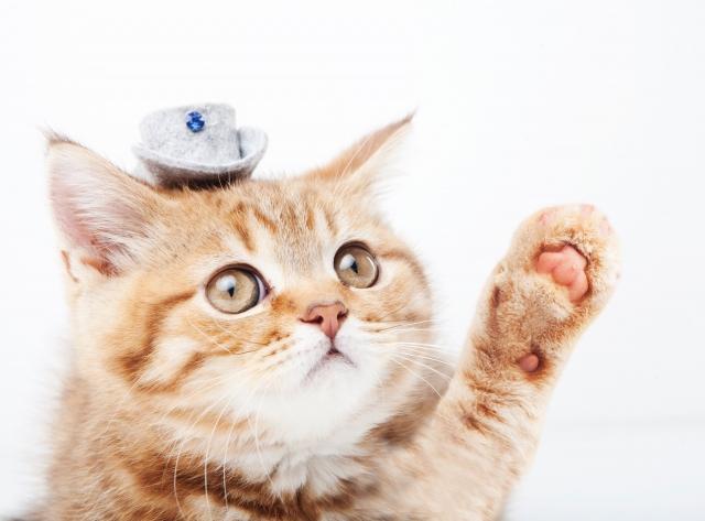新築の住宅で猫を飼いたい!キズを作らないための対策とは