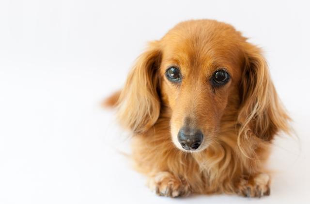 ペットの騒音は防音カーテンが効果大?犬の鳴き声の場合は?
