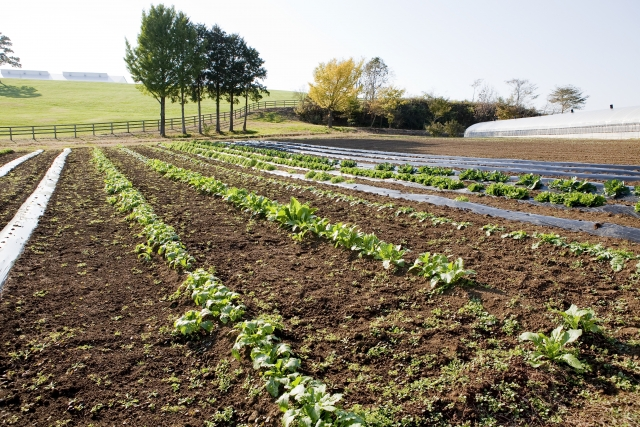 地目が畑である農地に家を建てる!手続きや注意点を知ろう